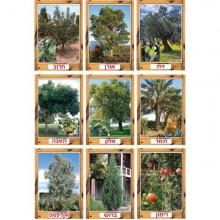 ערכת תמונות עצים