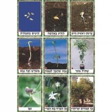 ערכת תמונות מחזור חיי הצמח